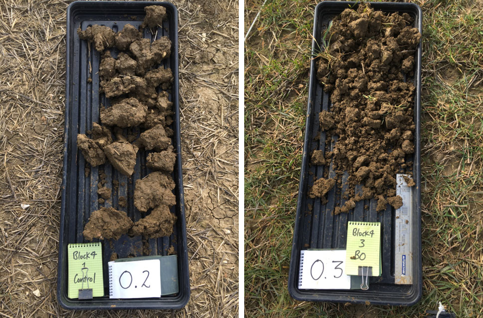 Typical difference in soil structure experiment 1: LH Control with no cover crop VESS=5, RH With Black oat cover crop VESS=3. Source: David Purdy Project Lamport Spring 2020