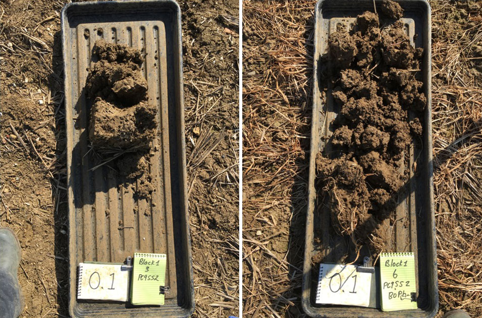 Typical difference in soil structure experiment 2: LH no cover crop VESS=5, RH with cover crop VESS=3. Source: David Purdy Project Lamport Spring 2020