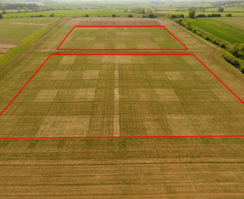 Spring wheat plots both experiments, experiment two (1st year) in foreground and experiment one (now in 2nd year) at the top 7th May 2020